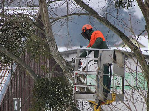 Tree Removal | Tree Service | Joliet Illinois